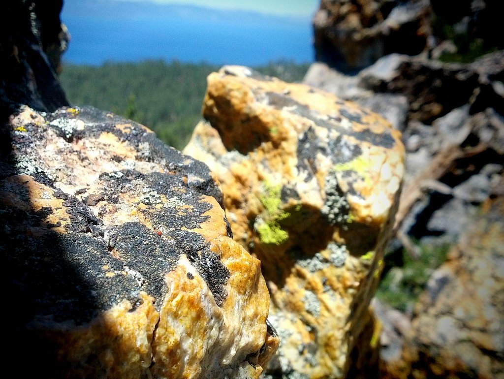 rocks and lichen